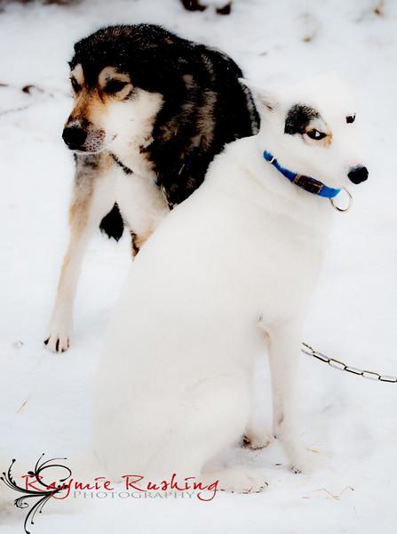 Ichabod and Juno
