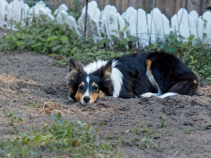 Digging Is Tiring!