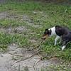 Dragging a Branch