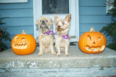 Dogs & Pumpkins