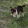 Pixie the Lumberjack