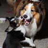Don't Bite Me!