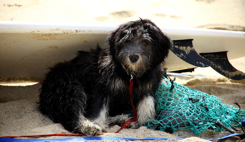 Tara, Surf Dog, Dalmore Beach, Isle of Lewis, Scotland