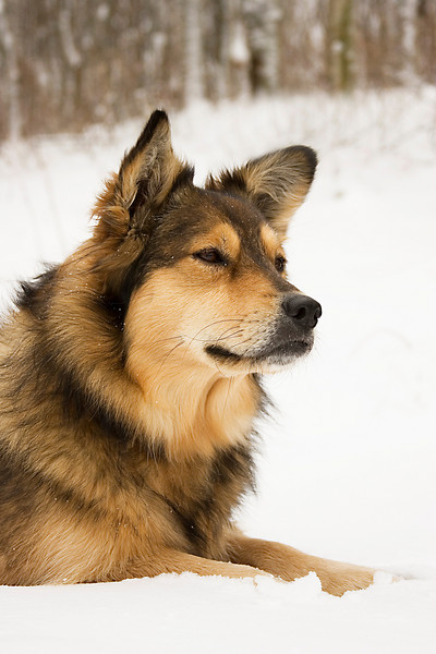 My beautiful dog, Elsa