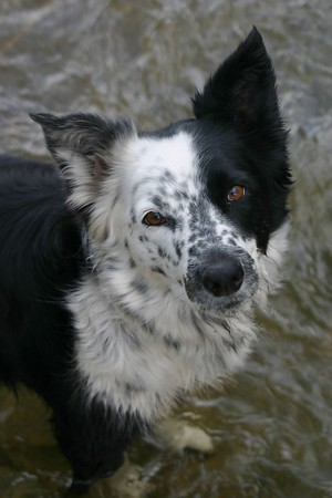 Unknown River Dog