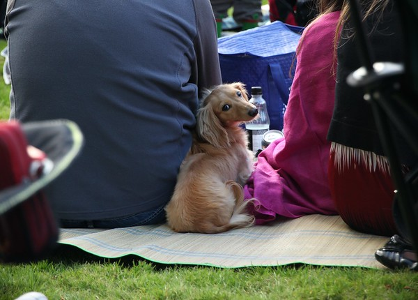 Dog at the concert, Fyvie Castle