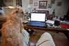 Helping Pat on the Laptop - Little always has to be right in the middle of the action - Photo by Pat Bonish