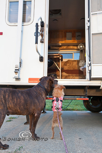 Come on Mama, we want to go for a walk - Little and Luca await Cindy while Camping in Arkansas - Photo by Pat Bonish