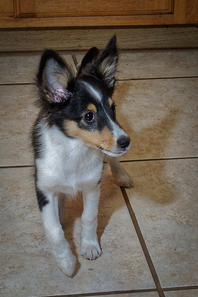Pixie in the Kitchen