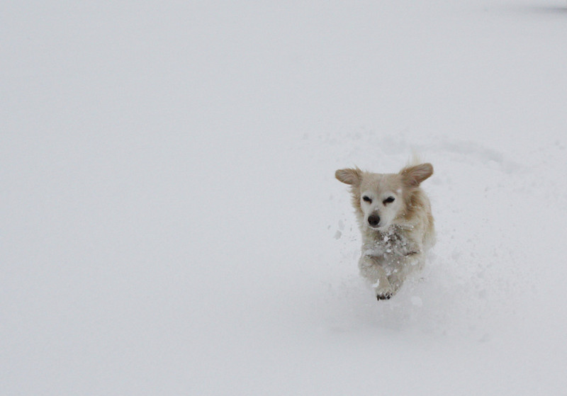 Trixie the snow dog