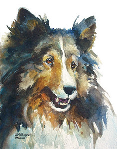 Sheltie One