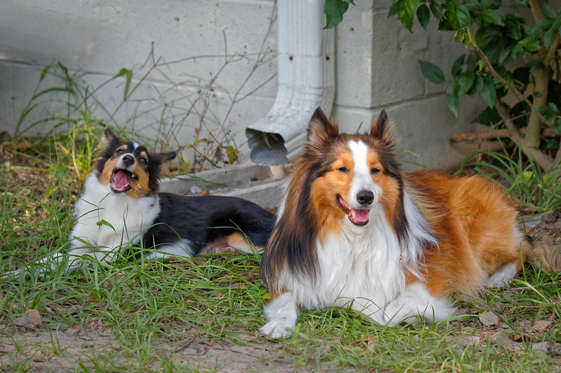 Hanging out in the Yard