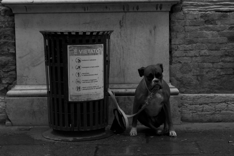 Italy, Venice, Dog Tied Up to Bin SNM