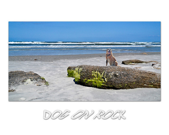 Dog on Rock