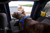 Leaning into her Brother so she can feel the breeze while driving - Little & Luca in the Truck - Photo by Pat Bonish