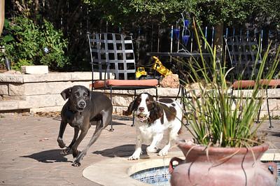 Zoe & Django 113008 002