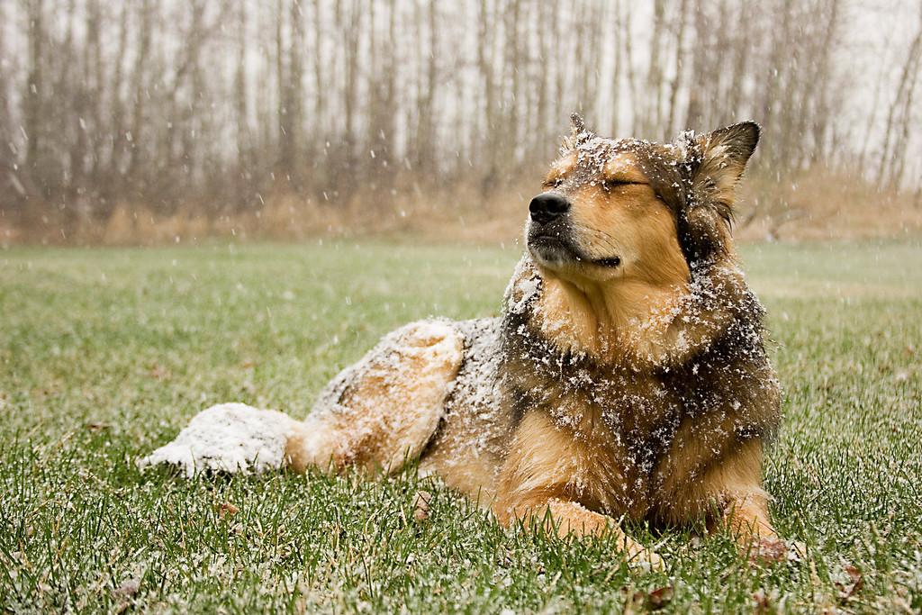 'Enjoying' snow in May