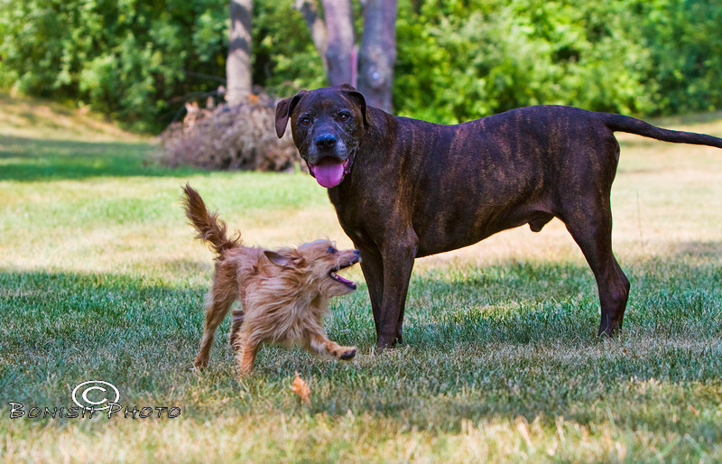 Running Circles around Luca - The Dynamic Duo - Photo by Pat Bonish