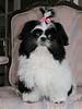 Little Missy Prissy