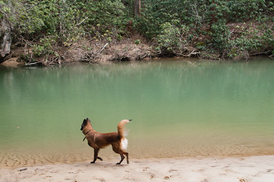 Vivre at Bark Creek.