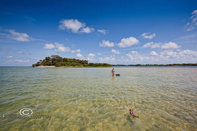 Swimming to Mama - Little on the Sand Bar in Cedar Key Florida - Photo by Pat Bonish