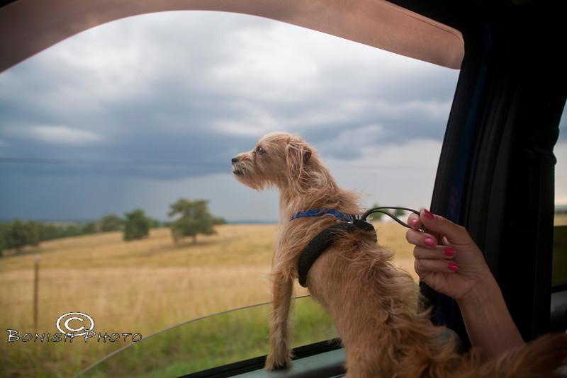 Loving the Smells of Arkansas Farmland - Photo by Pat Bonish