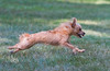 Fastest Little Dog in Town - Photo by Pat Bonish