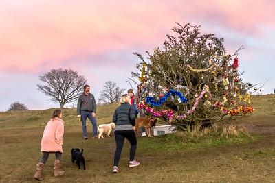 Dog's Christmas Tree-7834.jpg