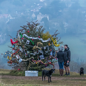 Dog's Christmas Tree-7581.jpg