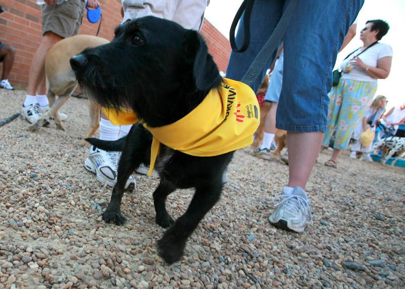 Cool tripod dog!