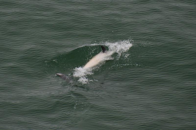 Dolphin antics