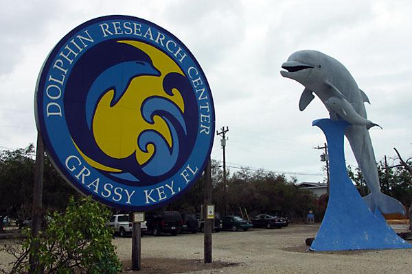 Dolphin Research Center, Marathon Florida