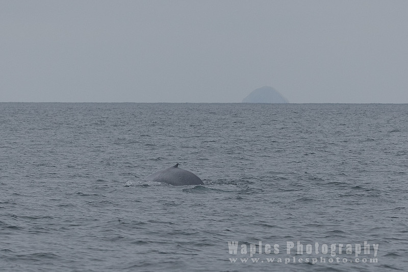 BlueWhale-0265