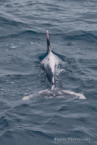 BlueWhale-0102