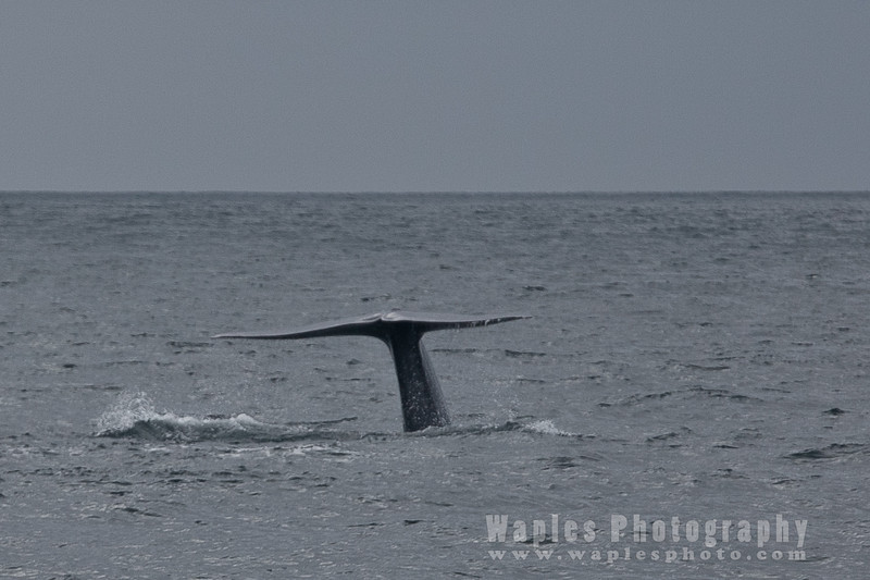 BlueWhale-0314