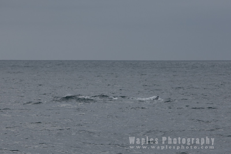 BlueWhale-0321