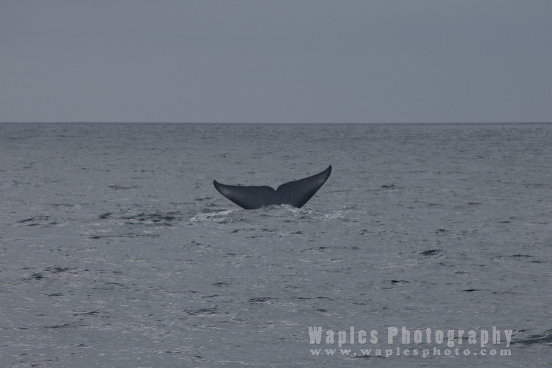 BlueWhale-0319
