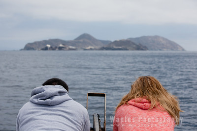 Dolphins, Whales, and the Coronado Islands
