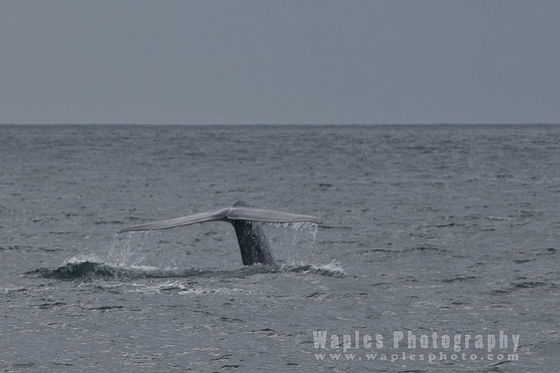 BlueWhale-0313