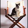 The Directors Cat