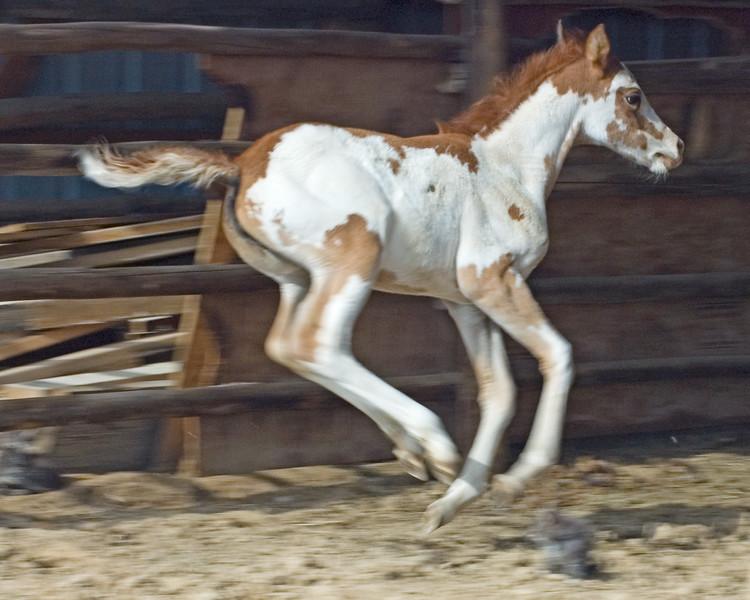 Painted Pony-1211