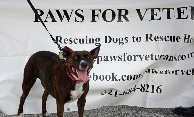 "Date:  6/29/13<br /> Location:  Merritt Island, FL<br /> Puma says ""check out Paws for Veterans at our website at  <a href=""http://www.pawsforveterans.com"">http://www.pawsforveterans.com</a>"""