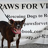 "Date:  6/29/13<br /> Location:  Merritt Island, FL<br /> Puma says ""check out Paws for Veterans at our website at  <a href=""http://www.pawsforveterans.com"">http://www.pawsforveterans.com</a>"""