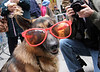 First Annual Times Square Dog Masquerade, New York 2005