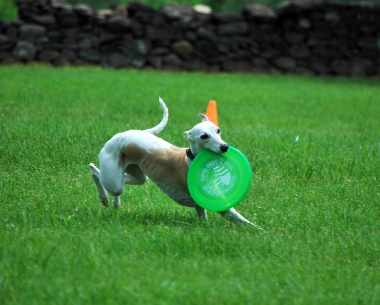 Dog-Discs 038-B