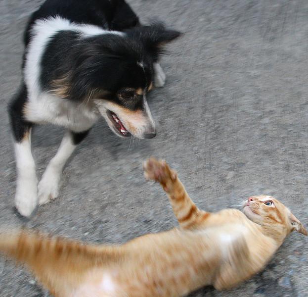 Edang and Diptoo playing
