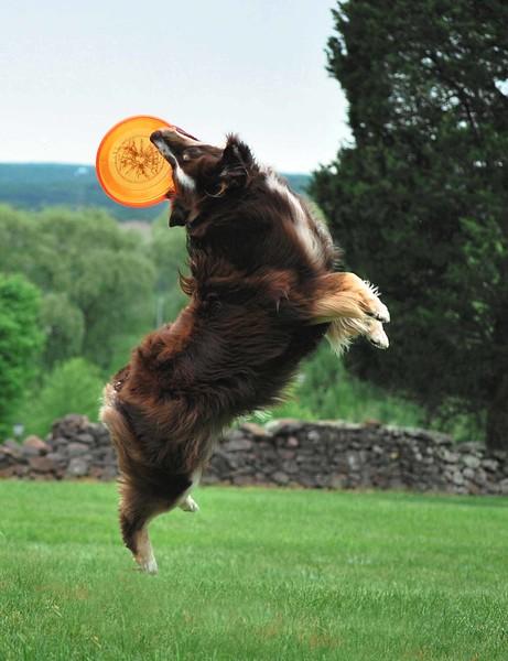 Dog-Discs 275-C