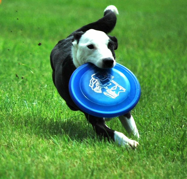 Dog-Discs 012-B