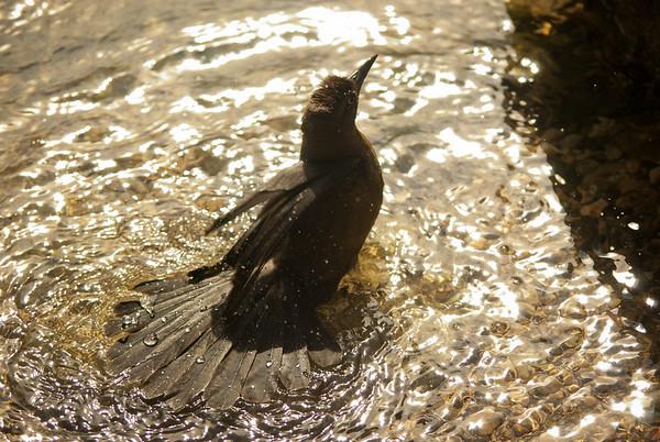 Bird playing