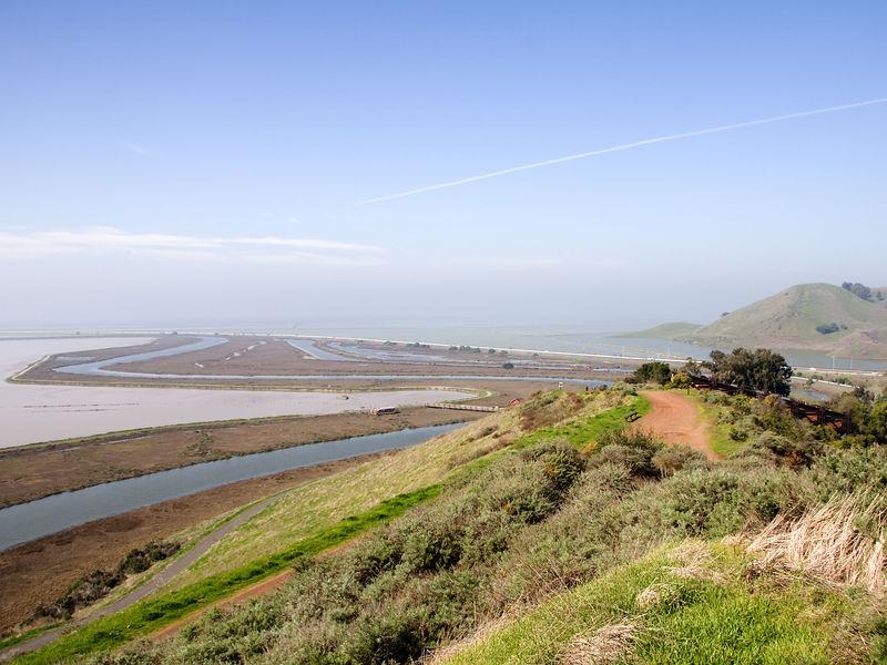 Don Edwards Wildlife Refuge Marshes
